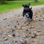 Jag springer så fort mina små ben orkar