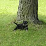 En kaxig liten hund