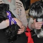 Miya och Moa med sina första rosetter.
