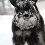 Med snöig nos