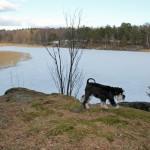 Tittar ut över sjön och väntar på islossning