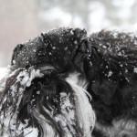 Lite trött efter lek i snön