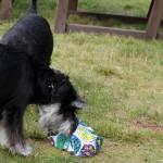 Nosar på presenten - kan det gå att äta