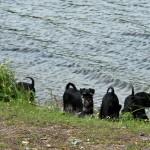 Undra om det finns något roligt i sjön