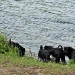 Alla vovarna nere vid sjön -2
