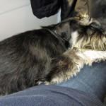 På tåget hem sover Moa mot Lenas ben