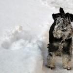 Lite lätt snöig