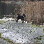 Vid Flatensjön