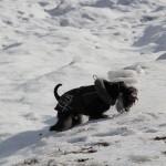Även i snön finns något att tugga på