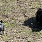 Moa och Cleo, springer, springer och springer.