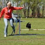Mimi i luften under agillitytävlingen