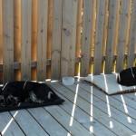 Ligger i skuggan på altan och vilar