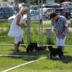 Moa och en annan hund hittar roligare saker att göra