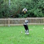 Försker fånga bollen