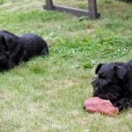 Mimi och Maya äter öron