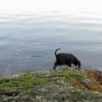 Moa är väldigt nyfiken på något i sjön