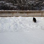 En liten tur runt i snön